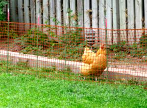 Pre-made fence